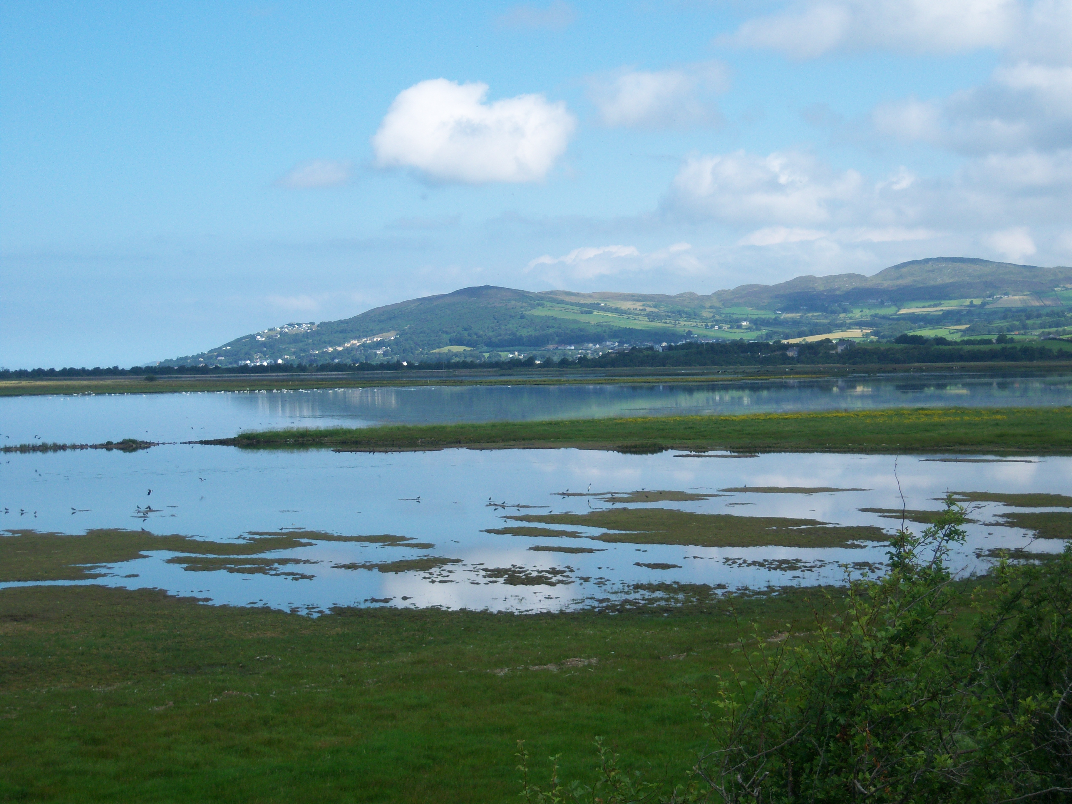 Inch Wildfowl Reserve