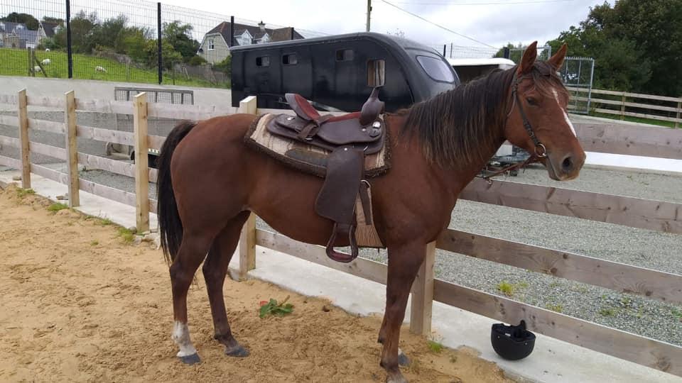 Wildwest Inishowen Equestrian