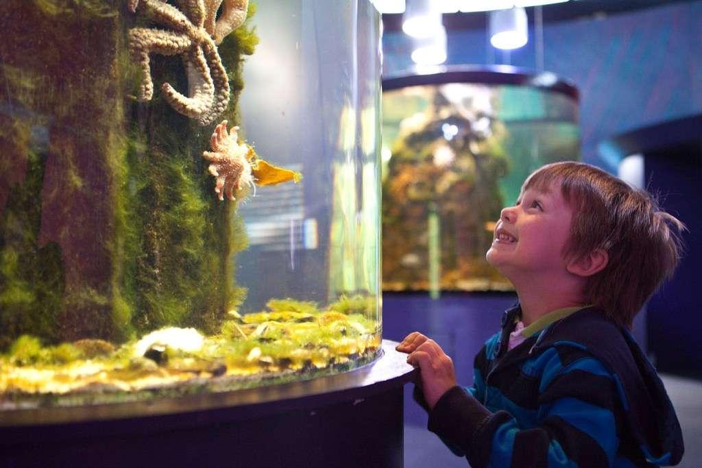 The Riverwatch Aquarium and Visitor Centre