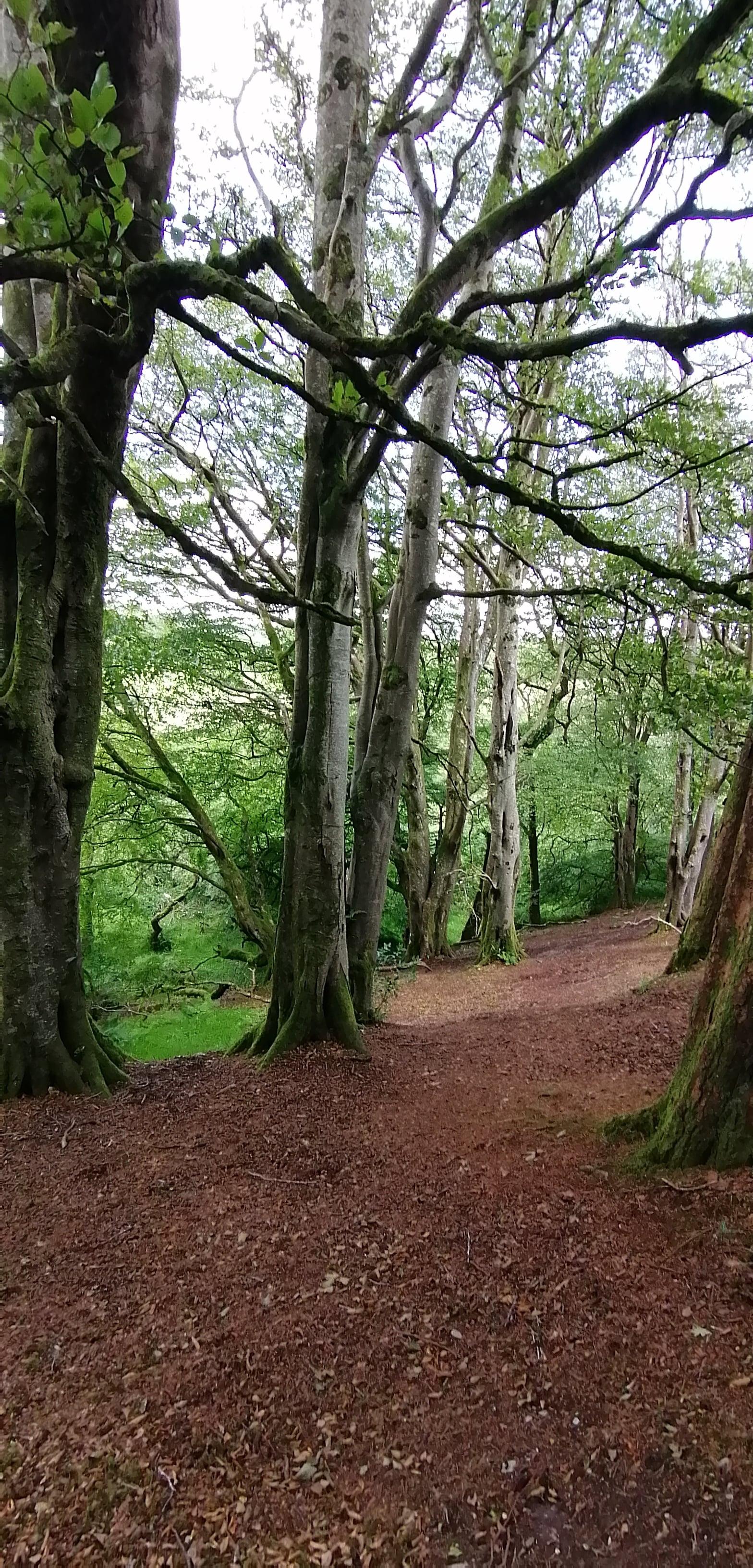 Lisnagra Woods